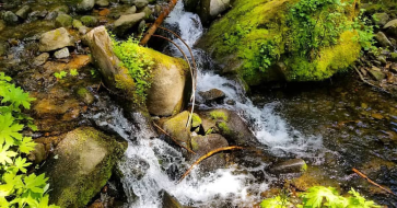 Image Description: Two images of water rushes through a creek and around rocks, with ferns hanging over the creek and a log washed into water.