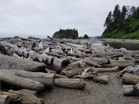 Piles of drift logs lie scattered on the beach. A creek flows to the ocean on the middle right of the photo, with a green hill side just above. A large sea stack island is in the center rear of the photo. It is a cloudy day.