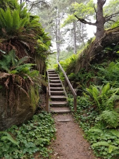 A set of steep stairs with a hillside on the left and trees and growth on the right.