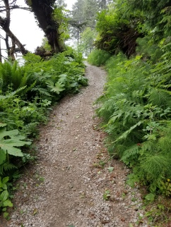 A steep loose gravel trail rises through low green growth.