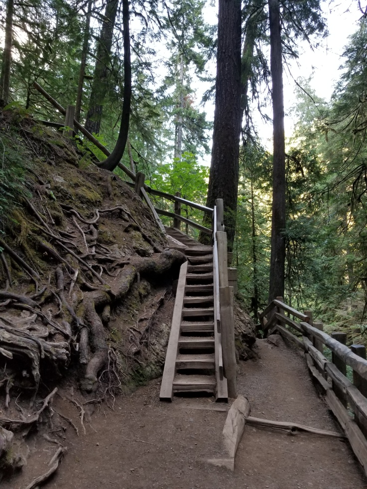 A steep set of wooden stairs with railing on one side and a hill covered with roots on the other.
