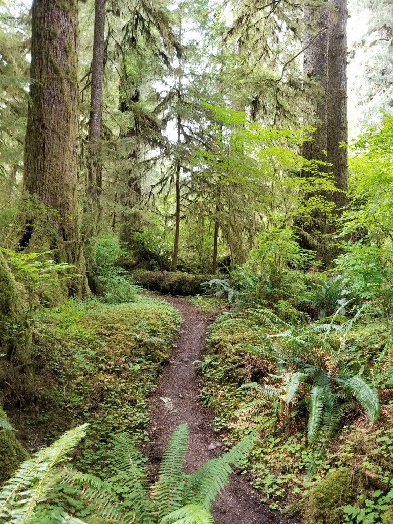 Narrow muddy trail through the rainforest, slight incline, trees and greenery surround