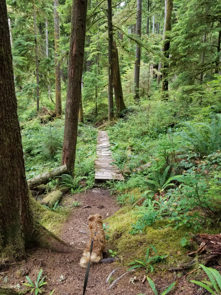 Boardwalk through the forest on the Ira Spring Wetland Trail