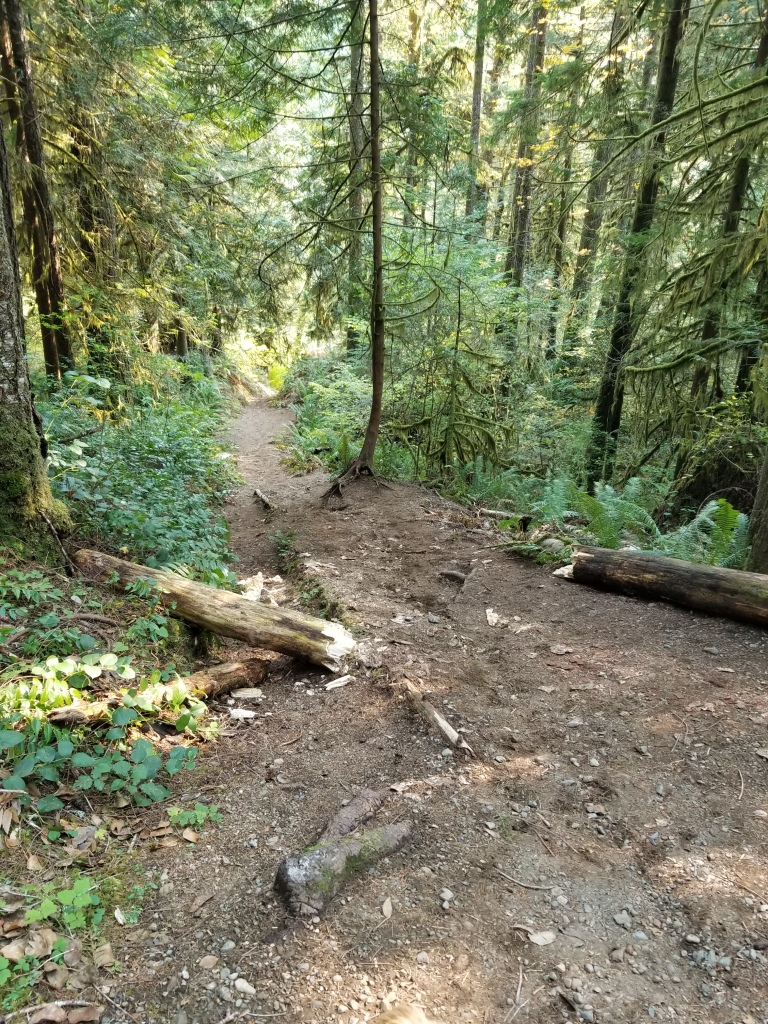 Dirt trail descends steeply with logs scattered on the side.