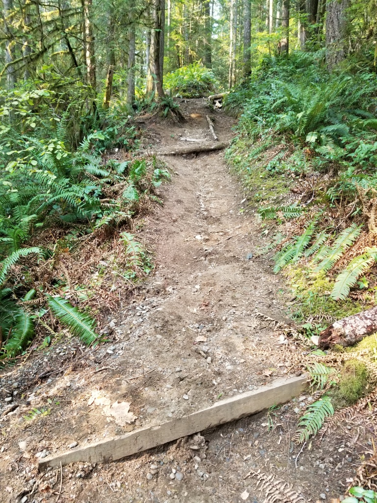 Trail rises steeply, with a rut in the center and two pieces of wood set in the trail.